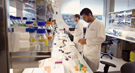 Biomedical Research (MSc & PhD Programs)